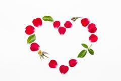 Pétales de rose et coeur de feuilles d'isolement sur le fond blanc Photo stock