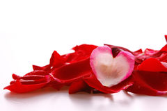 Pétales de rose et coeur rouges Images stock