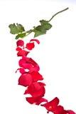 Pétales de Rose et Rose Photos libres de droits
