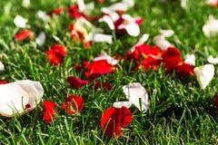 Pétales de rose oranges sur l'herbe verte photographie stock libre de droits