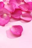 Pétales de Rose roses 01 Images libres de droits