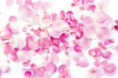 Pétales de Rose roses 01 Photographie stock libre de droits
