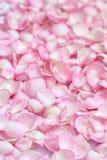 Pétales de Rose roses 01 Fond Photographie stock libre de droits