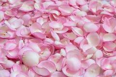 Pétales de Rose roses 01 Fond Photos libres de droits
