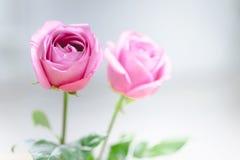 Pétales de rose roses pour le jour de valentines Image libre de droits