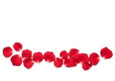 Pétales de rose rouges Photographie stock libre de droits