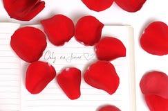 Pétales de Rose rouges de l'amour Image libre de droits