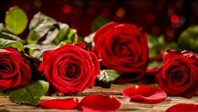 Pétales de rose rouges vifs Image libre de droits