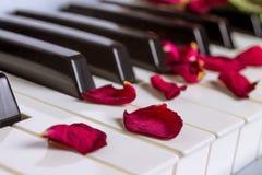Pétales de rose secs sur un clavier de piano photo stock