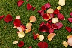 Pétales de Rose sur l'herbe Photographie stock libre de droits
