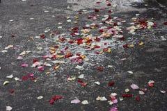 Pétales de rose sur une surface grise Images libres de droits