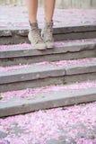 Pétales de Sakura au sol Image libre de droits