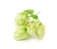 Pétales de vert de fleur d'houblon Photo libre de droits
