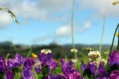 Pétales des fleurs pourpres contre le ciel Photographie stock libre de droits