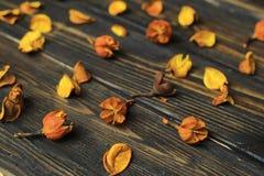 Pétales des fleurs sèches sur le fond en bois images stock