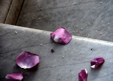 Pétales des roses du mariage Photos stock