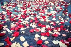 Pétales des roses rouges et blanches Images stock