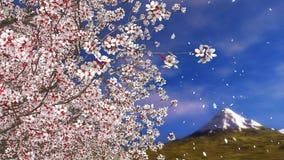Pétales en baisse et Mt Fuji de fleurs de cerisier de Sakura banque de vidéos