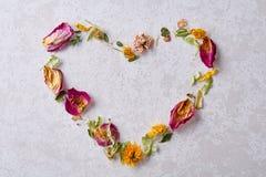 Pétales en forme de coeur d'isolement sur le fond blanc, vue supérieure, plan rapproché, foyer sélectif Image stock