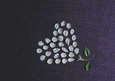 Pétales en forme de coeur de fleur photo stock