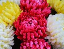 Pétales et fleurs jaunes violets vifs, fond naturel, beauté de jardin Images stock