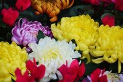 Pétales et fleurs vifs, fond naturel, beauté de jardin Photographie stock libre de droits