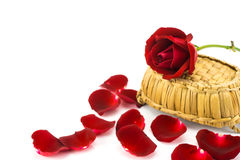 Pétales et roses rouges sur un fond blanc Images stock