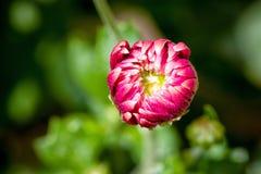 Pétales fermés de fleur photographie stock