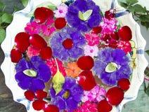Pétales mélangés de fleur dans une cuvette Image libre de droits
