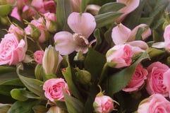 Pétales magnifiques de couleur rose Une fleur rose il est le romantique Photo stock