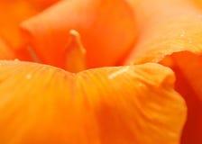 Pétales oranges de fleur Photographie stock