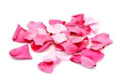 Pétales roses au-dessus de blanc Images stock