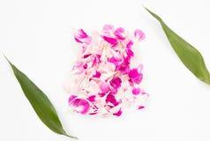 Pétales roses de canations Photos libres de droits