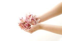 Pétales roses de cymbidium dans des mains image stock