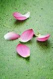 Pétales roses de lotus Photos libres de droits