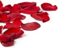 Pétales roses de Valentine de jour comme fond Photo libre de droits