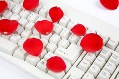 pétales roses et clavier Images stock