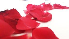 Pétales roses rouges Photographie stock libre de droits