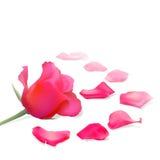 Pétales roses rouges illustration libre de droits