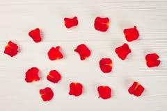 Pétales roses rouges sur le fond blanc Images stock