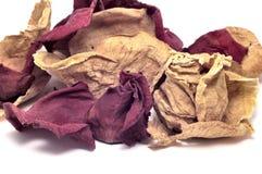 Pétales roses secs - plan rapproché Photographie stock libre de droits