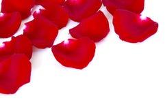 Pétales rouges Photos stock
