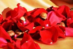 Pétales rouges des roses, symbole Images libres de droits