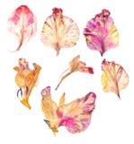 Pétales secs de fleur de glaïeul Photos libres de droits