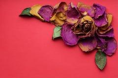 Pétales secs des roses sur un fond rouge Image stock