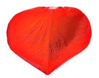 Pétalo color de rosa rojo Foto de archivo libre de regalías