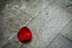 Pétalo color de rosa rojo en la acera Fotografía de archivo
