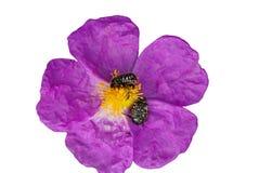 Pétalo de la flor Imagenes de archivo