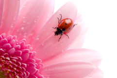 Pétalo de la flor Foto de archivo