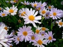 Pétalo de la fragilidad de la flor de la naturaleza Fotografía de archivo